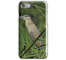 Striated Heron and Aquatic Plants iPhone Case/Skin