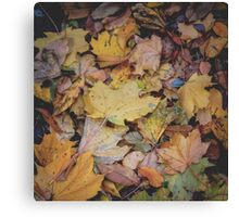 I recall Central Park in Fall Canvas Print