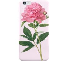 'The Double Sweet-scented Chinese Peony' 1815 iPhone Case/Skin