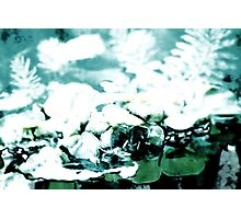 Lily pad Fading Into Nothingness Photographic Print