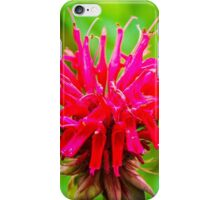 Bee Balm - Red iPhone Case/Skin
