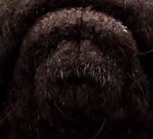 Pug Close-Up Sticker