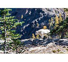 Forest Wild Lamb Creature Nature Fine Art Photography 0040 Photographic Print