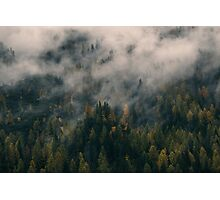 Smoky Mountain Forest Nature Fine Art Photography 0043 Photographic Print