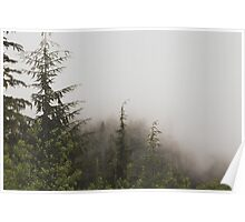 Foggy Pine Forest Nature Fine Art Photography 0050 Poster