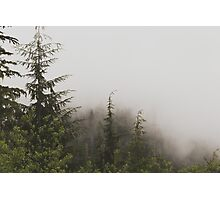 Foggy Pine Forest Nature Fine Art Photography 0050 Photographic Print