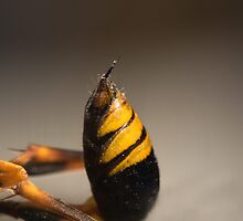 Pack A Punch - Mud Dauber Wasps by JayWolfImages