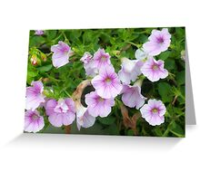 Alpine wildflower, Photographed in Austria, Tyrol Greeting Card
