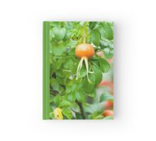 Flowering Orange Garden plants Hardcover Journal