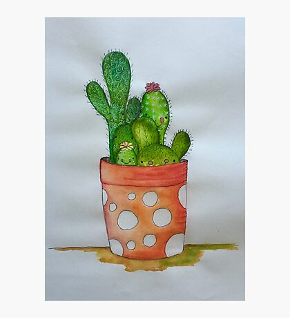 Cactus family Photographic Print