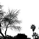 Black On White by Chet  King