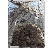 Sugar Maple iPad Case/Skin