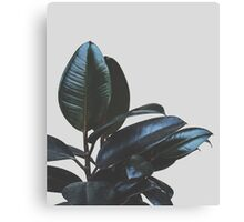 Botanical Art V4 #redbubble #tech #style #fashion Canvas Print