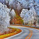 I love you, Arkansas by NatureGreeting Cards ©ccwri