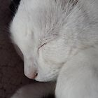 Sleeping Cat by Deb Vincent