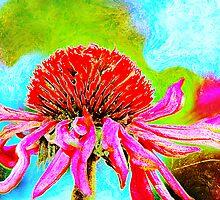 Echinacea Purpurea.. by Jolanta Anna Karolska / Artbyjolla