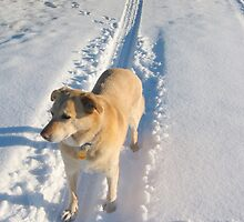 Waiting Dog in the Snow by TruDesigns
