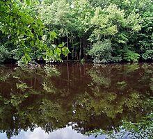 Congaree Nature Reserve, South Carolina, USA by Jan Stead JEMproductions