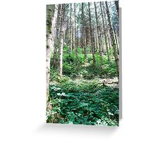 Dense Alpine Forest Photographed near Itter, Tirol, Austria  Greeting Card