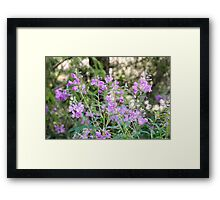 Pink Alpine wildflower, Photographed in Austria, Tyrol Framed Print