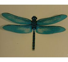 Little Dragonfly Photographic Print