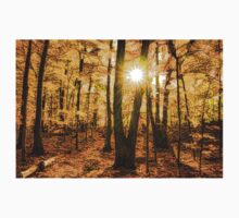 Impressions of Forests - Sunburst in the Golden Forest  Kids Clothes