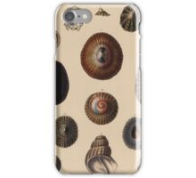 The zoology of Captain Beechey's voyage - Shells iPhone Case/Skin
