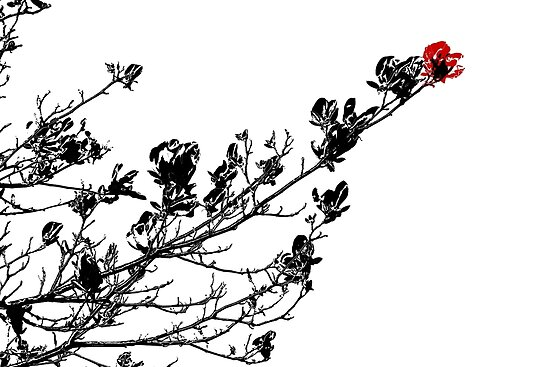 Longing To Be Red - Black White and Red Series by Betty Northcutt