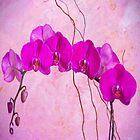 Purple Phaleanopsis Orchids by daphsam