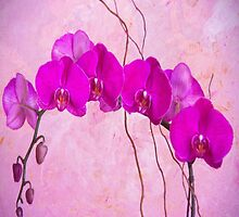 Purple Phaleanopsis Orchids by daphsam