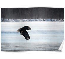 American Bald Eagle With A Fish 2016-1 Poster