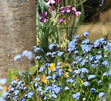 Forget-Me-Not on Mother's Day by Terri Waters