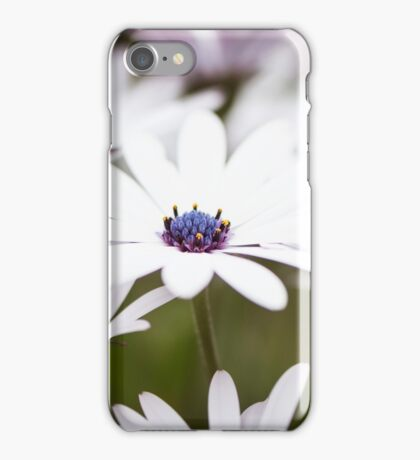 White African Daisies iPhone Case/Skin