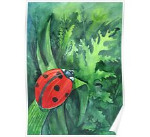 Red cute ladybird sitting on a leaf of grass Poster