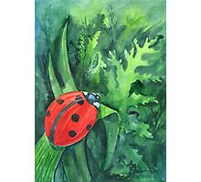 Red cute ladybird sitting on a leaf of grass Photographic Print