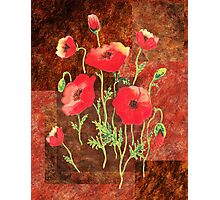 Decorative Red Poppies Photographic Print
