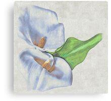 Precious Lily Canvas Print