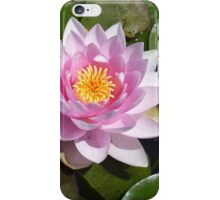 Nature's perfect art  iPhone Case/Skin