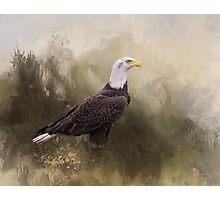 Watchful - American Bald Eagle Photographic Print