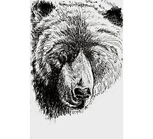 Drunk Grizzly Photographic Print