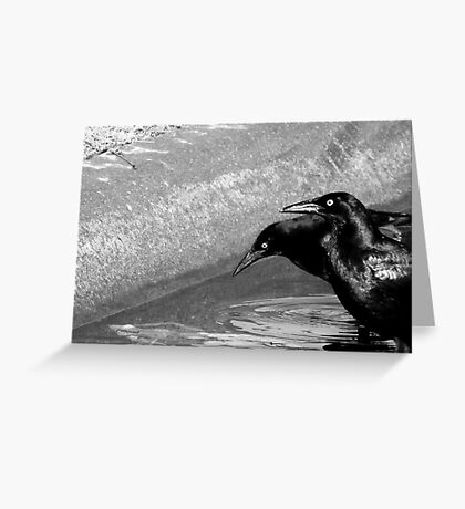 GRACKLES (Black and white photo) Greeting Card
