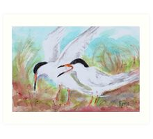 Seabirds - Terns Art Print