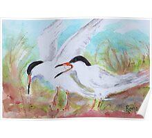 Seabirds - Terns Poster