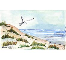 The Seagull and the beach Photographic Print