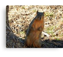 WHAT'S THAT YOU SAY?  Canvas Print