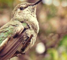 Hummingbird Habitat Sticker