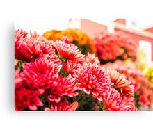 Country Blossoms Canvas Print