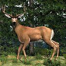 Black Tail Deer by Walter Colvin