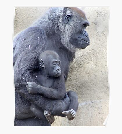Gorilla Mom and Baby Poster