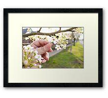 Petal Pick Framed Print